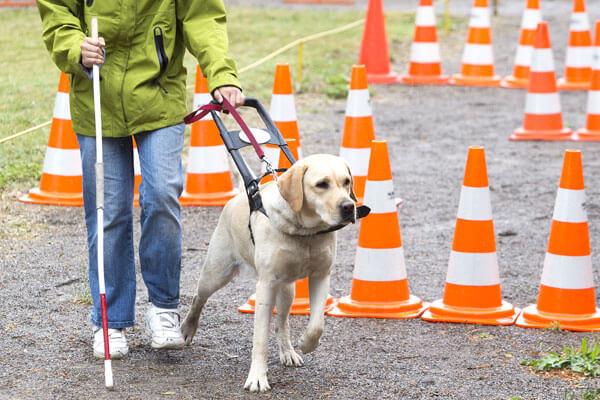 『盲導犬育成支援活動』